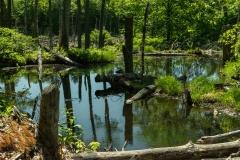 Poke-O-Moonshine Pond