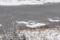 Putts Creek Winter Swamp